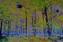 Fantasy Forest Art von David Pyatt