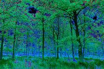 Forest Art by David Pyatt