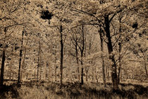 Digital-sep-forest