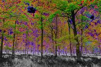 Split-tone-forest-2
