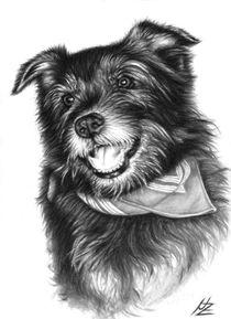 Lachender Hund - Laughing Dog von Nicole Zeug