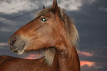 Red Horse Sunset by © Rooky Studios