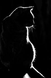 Cat-silhouette