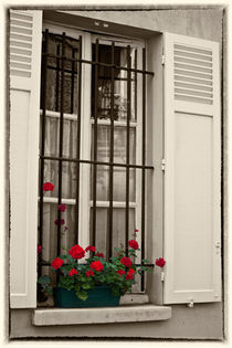 Window box in Paris by Sheila Smart