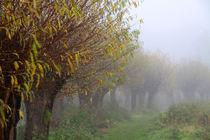 Herbstlandschaft mit Kopfweiden im Nebel 03 von Karina Baumgart