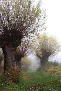 Herbstlandschaft mit Kopfweiden im Nebel 05 von Karina Baumgart