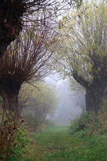 Herbstlandschaft mit Kopfweiden im Nebel 06 von Karina Baumgart