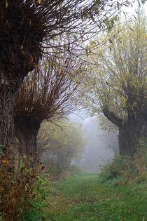 Herbstlandschaft mit Kopfweiden im Nebel 07 von Karina Baumgart
