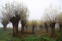 Herbstlandschaft mit Kopfweiden im Nebel 10 von Karina Baumgart