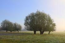 Herbstlandschaft mit Kopfweiden im Nebel 11 von Karina Baumgart