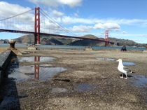 Golden Gate View  by Azzurra Di Pietro