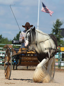 Gypsy Vanner Horse and American Flag by © Rooky Studios
