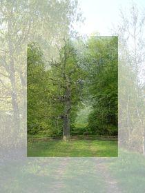 Toter Baum by Elke Balzen