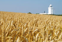Lighthouse with Cornfield by aremak