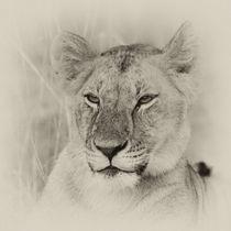 Lioness II von Ralph Patzel