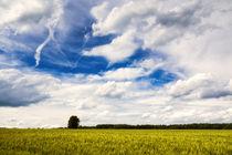 Getreidefeld und blauer Himmel mit weißen Wolken im Sommer von Matthias Hauser