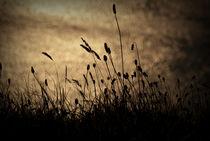 Grass Stalk by aremak