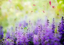 All a Flutter von Linde Townsend