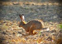 Rennen by eifel-wildlife