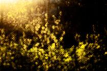 spring plants by Elena Laska