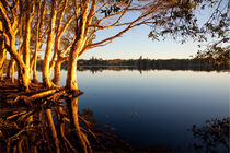 Lake Ainsworth, Lennox Head von Mike Greenslade
