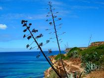Aloevera auf Steielküste(Portugal Algarve) by jefroh