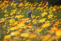 southafrica ... flowers, flowers and a guineafowl von meleah