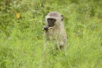 southafrica ... my tasty sugar cane! by meleah