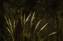Plgm-0008-grass