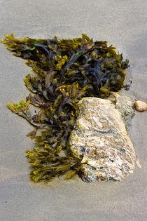 Algen-Stein am Strand von Lecanvey. by Karsten Müller