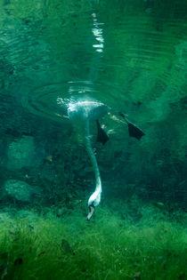 Down the Swannee by Vitya Lyagushkin