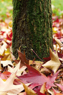 Autumn Tree Trunk And Leaves von moonbloom