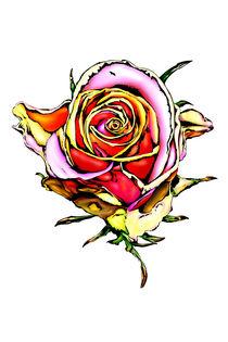 Rose flower drawing by Rafal Kulik