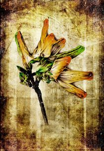 flower nature plant art design von Rafal Kulik