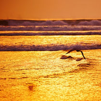 golden sea von photoplace
