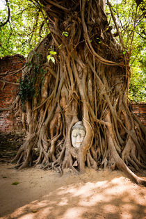 Famous Buddha head in Ayutthaya. von Tom Hanslien