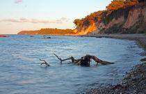 Steilküste Königshörn  von Simone Splinter