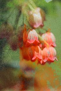small bell von © Ivonne Wentzler