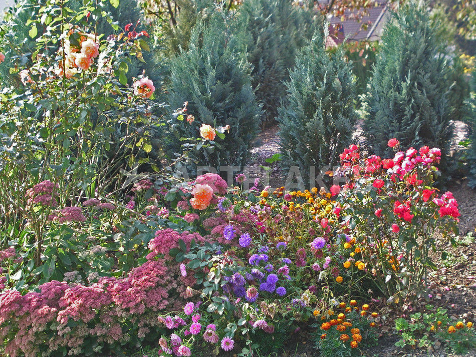 romantischer bunter blumengarten flowers in the garden fotografie als poster und kunstdruck. Black Bedroom Furniture Sets. Home Design Ideas