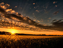 Sunset Over the Golden Meadow by Don Schwartz