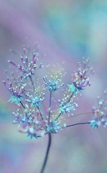 RAINBOW FLOWER by © Ivonne Wentzler