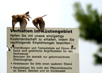 Angewandter-kuestenschutz-da-fliegen-wir-drauf