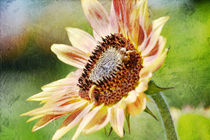 Sunflower by Patricia N