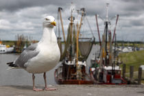 Silbermöwe im Hafen - herring gull in the harbor by ropo13