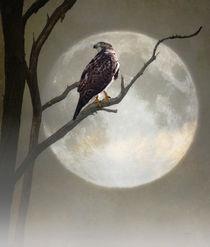 A-hawk-in-the-moonlight