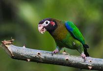 Img-8180-2-papagei