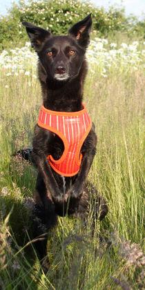 Hund in Blumenwiese 003 by Monika Dobberstein