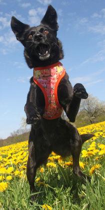 Hund in der Blumenwiese 001 by Monika Dobberstein