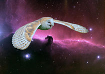 Barn Owl v. Horsehead Nebula. by Heather Goodwin