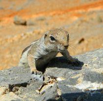 Streifenhörnchen von anowi